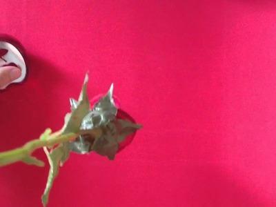 Cómo secar rosas correctamente - Cómo secar una rosa o una flor para conservarla
