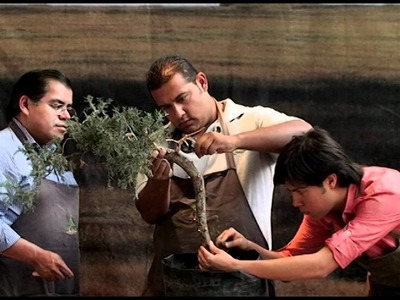 Demostracion de como se hace un bonsai