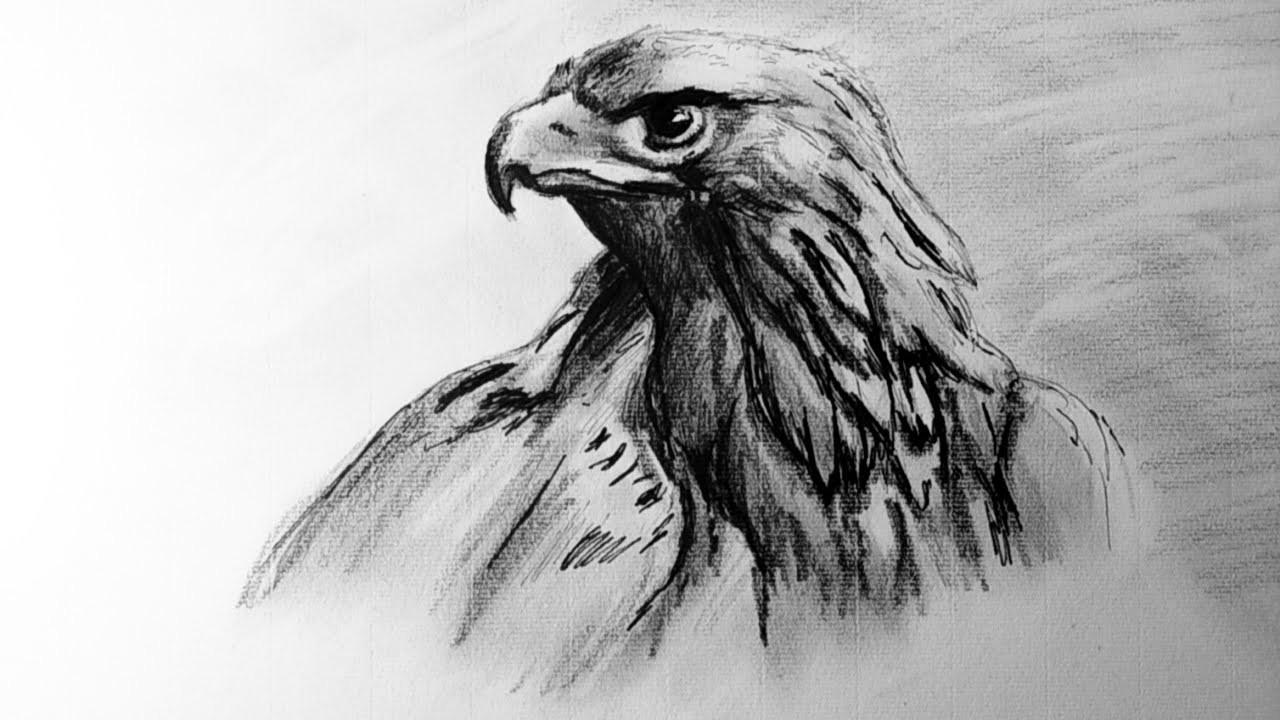 Como Dibujar un Aguila Realista Paso a Paso | Dibujo Artístico, Tecnica Grafito y Tinta Avanzada