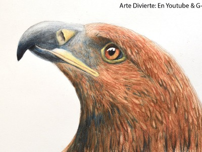 Cómo dibujar una cabeza de águila con lápices de colores acuareleables - Arte Divierte