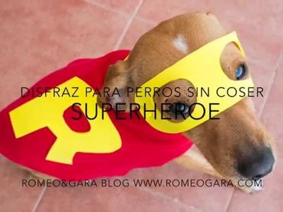 DIY: Disfraz de superhéroe para perro sin coser