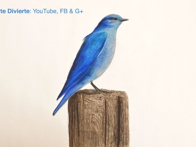 Cómo dibujar un pájaro azul con lápices de colores - El cuento del pájaro azul