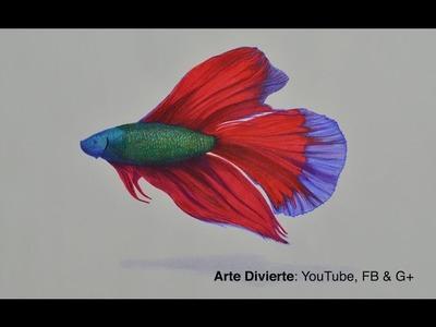 Cómo dibujar un pez beta con colores