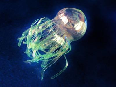 De botellas de plástico a medusas. De basuras marinas a sueños del mar