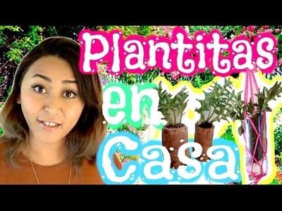Plantas en Casa! Decora con Plantitas!. DIY. MonCruzPinto♥