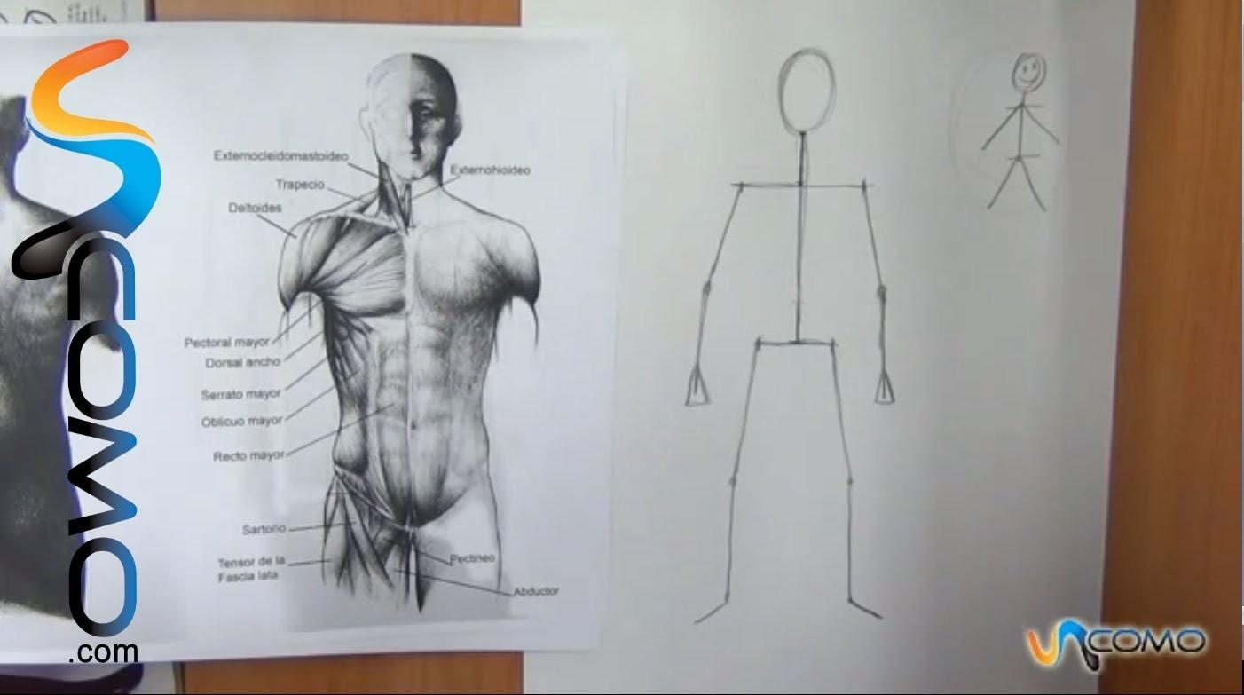 Cómo dibujar el cuerpo humano  (1º parte)