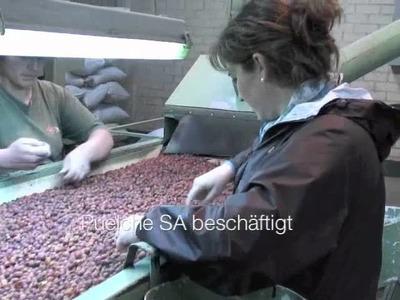 Cultivo Rosa Mosqueta Orgánica en Chile
