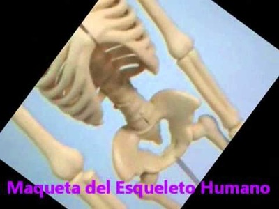 Maqueta esqueleto