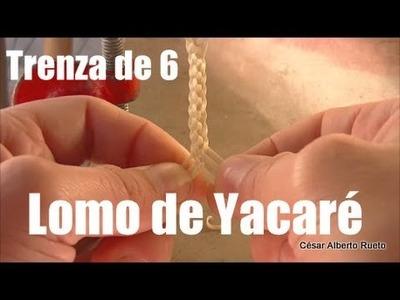 """Trenza de 6 """"Lomo de Yacaré""""  """"El Rincón del Soguero"""""""