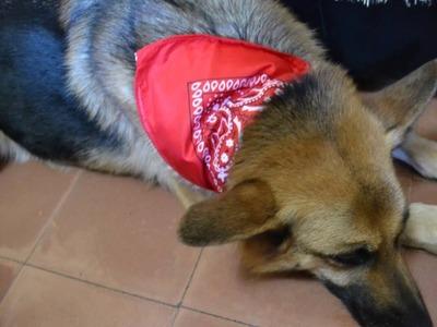 Como hacer de mosaico con e v a my crafts and diy projects for Como hacer un collar para perro