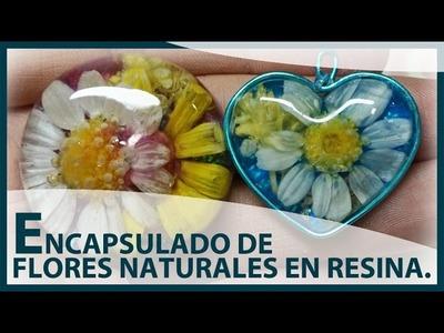 ENCAPSULADO DE FLORES NATURALES EN RESINA UV. Charms o colgantes de flores silvestres.