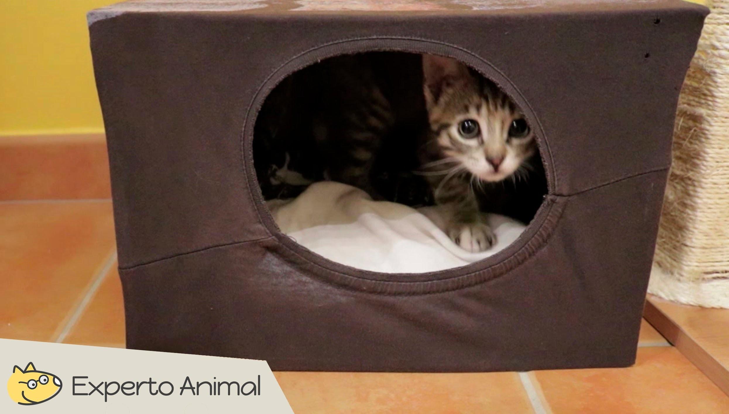 Casa para gatos casera con una camiseta diy - Casas para gatos baratas ...