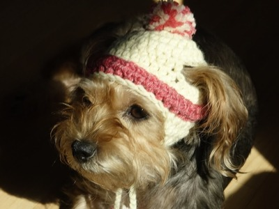 Gorro para perros y para perras a crochet.how to crochet a dog hat.