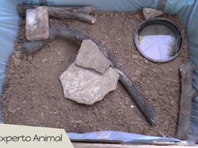 Cómo hacer un terrario con materiales reciclados