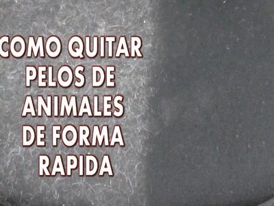 DIY COMO QUITAR PELOS DE ANIMALES DE LA ROPA DE FORMA RÁPIDA Y FACIL
