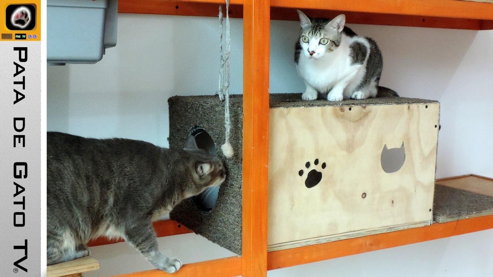 Caja de juegos para gatitos. Playground box for cats.