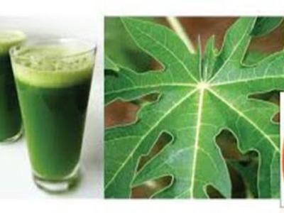 Los Beneficios Para La Salud Que Tienen Las Hojas De Papaya  Nunca Lo Imagine!