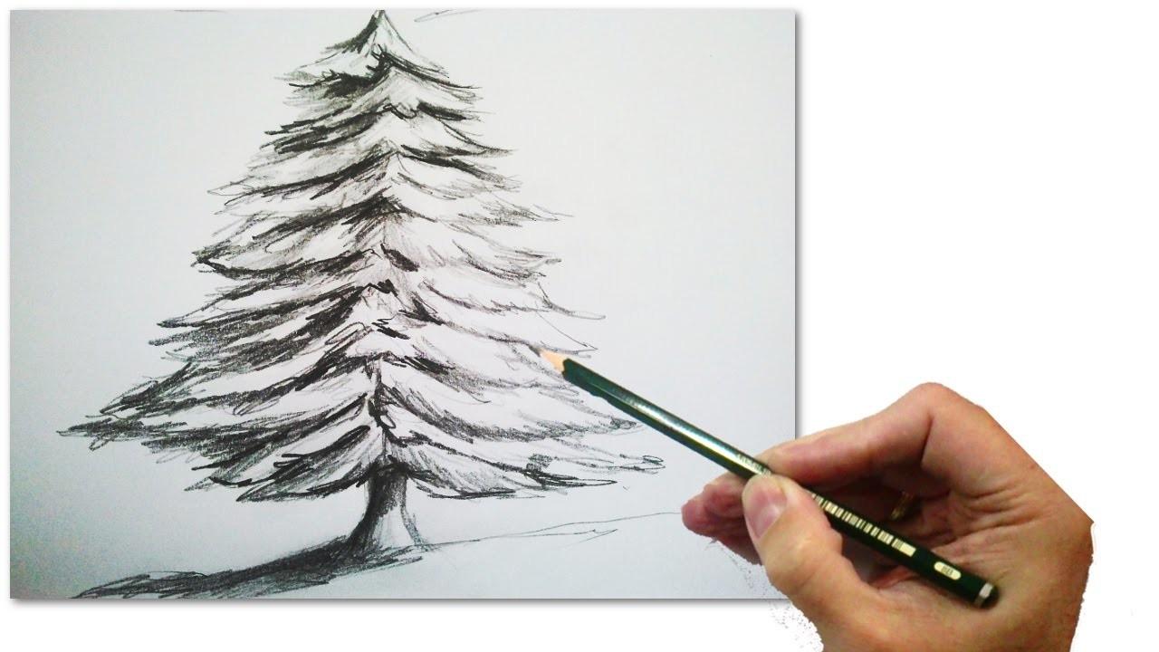 C mo dibujar un abeto o arbol de navidad realista paso a - O arbol de navidad ...