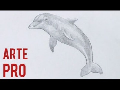 Como dibujar un Delfin a lapiz paso a paso