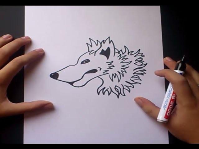 Como dibujar un lobo paso a paso   How to draw a wolf