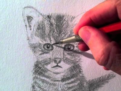 Como dibujar un Gato realista a lápiz - Arte Divierte