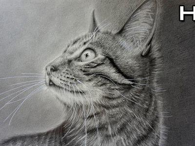Cómo Dibujar un Gato Realista a Lápiz Paso a Paso - TUTORIAL