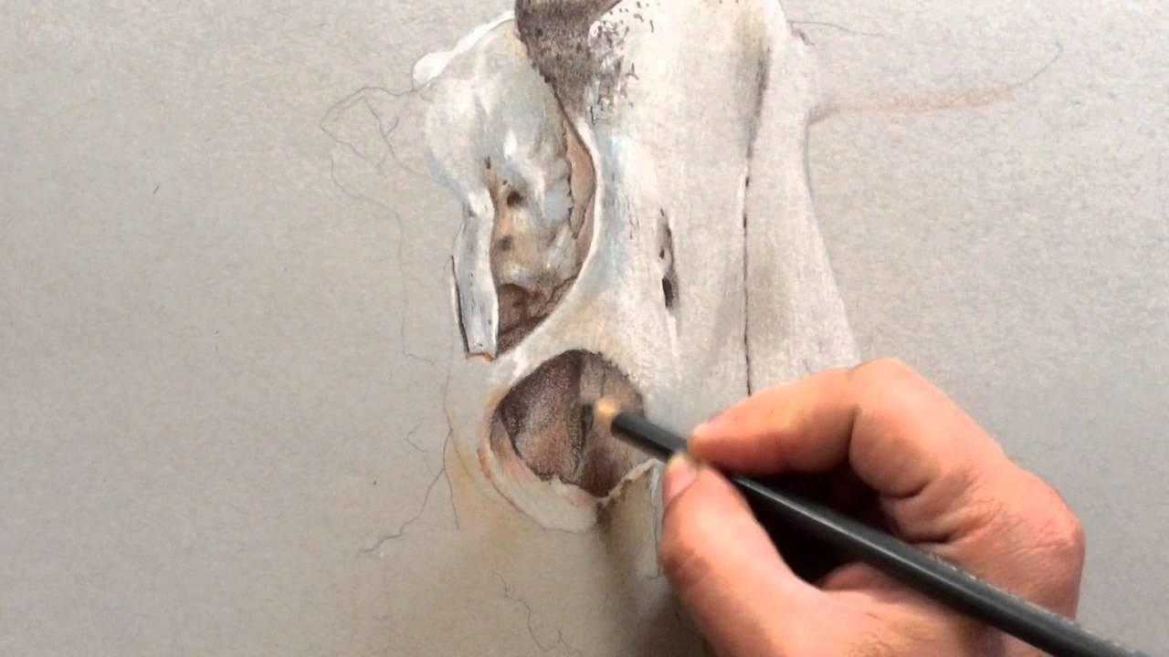 Iniciando Dibujo de Calavera de Vaca