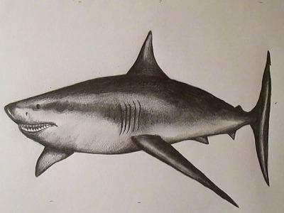 Cómo dibujar un tiburón blanco paso a paso a lápiz, How to Draw a Shark