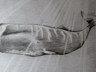 Cómo dibujar una ballena a lápiz paso a paso, cómo dibujar cachalote a lápiz