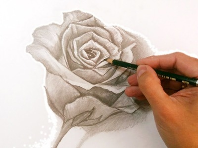 Cómo Dibujar Una Rosa a Lápiz Paso a Paso: Técnicas de Dibujo a Lápiz