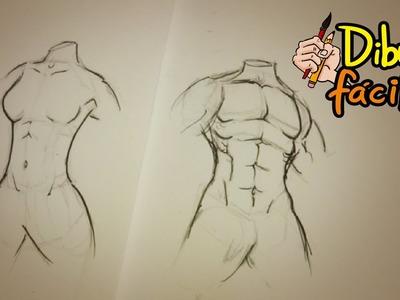 Como dibujar torso (hombre y mujer) | How to draw Torso (man & woman)