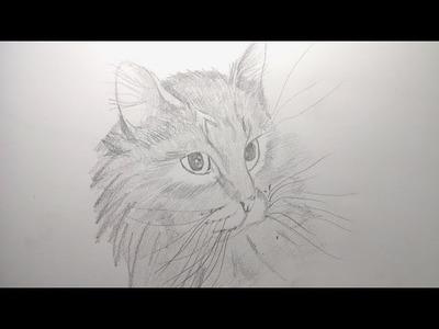Como dibujar un gato a lapiz paso a paso