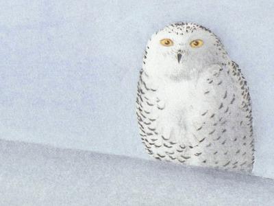 Tarjeta navideña original: Acuarela de  una lechuza en la nieve -Arte Divierte