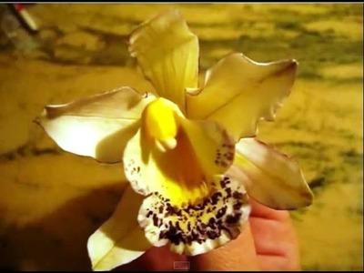 Orquídea Cymbidium en Pasta de Goma - Gum Paste Cymbidium Orchid