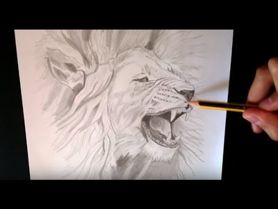 Como dibujar un león realista - How to draw a realistic lion