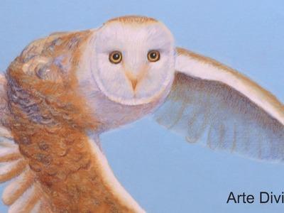 Cómo dibujar una lechuza realista volando - Arte Divierte