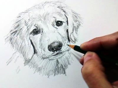 Técnicas y Tips de Dibujo con Lápiz de Grafito y Cómo Dibujar un Perro a Lápiz