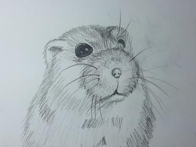 Como dibujar un Hamster paso a paso [El dibujante]