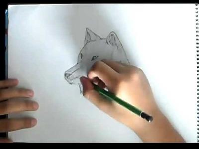 Como Dibujar un Lobo-Paso a Paso!!