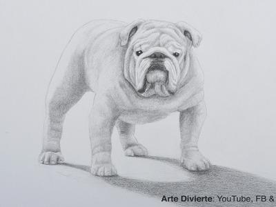 Cómo dibujar un perro bulldog a lápiz