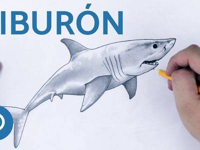 Cómo dibujar un Tiburón - Speed Drawing