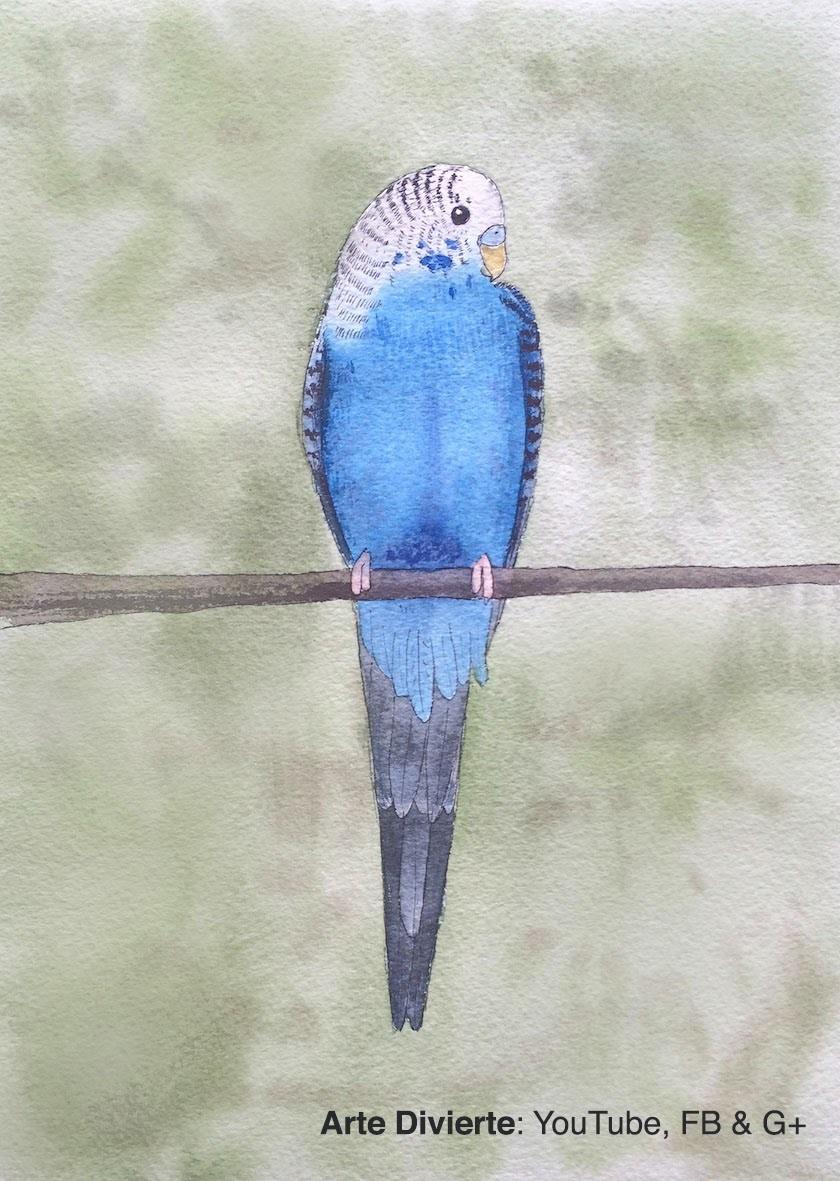 Cómo pintar un periquito australiano a la acuarela
