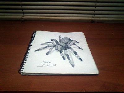 Dibujo a lapiz araña 3D