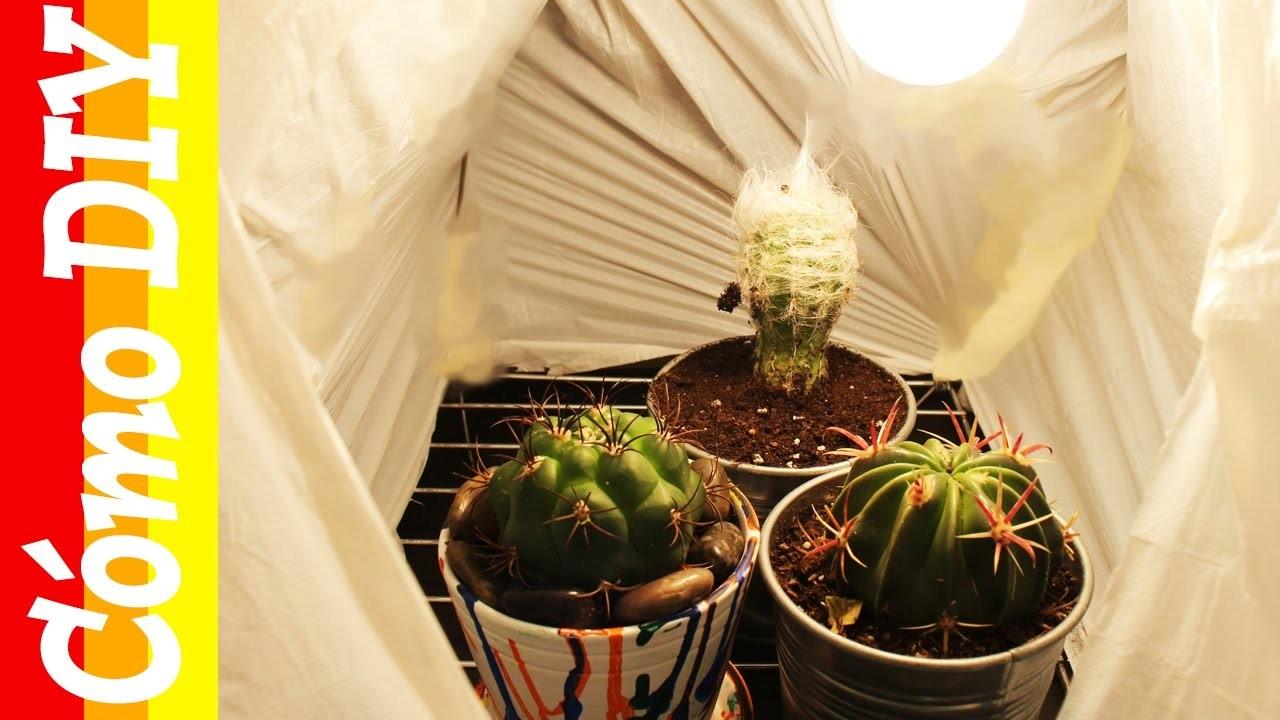 Cómo hacer un invernadero para tu casa. Tutorial Invernadero casero DIY