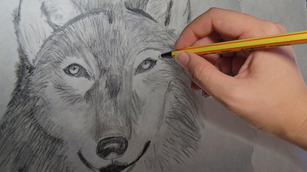 Como Dibujar Un Lobo Realista A Lapiz Paso A Paso Facil