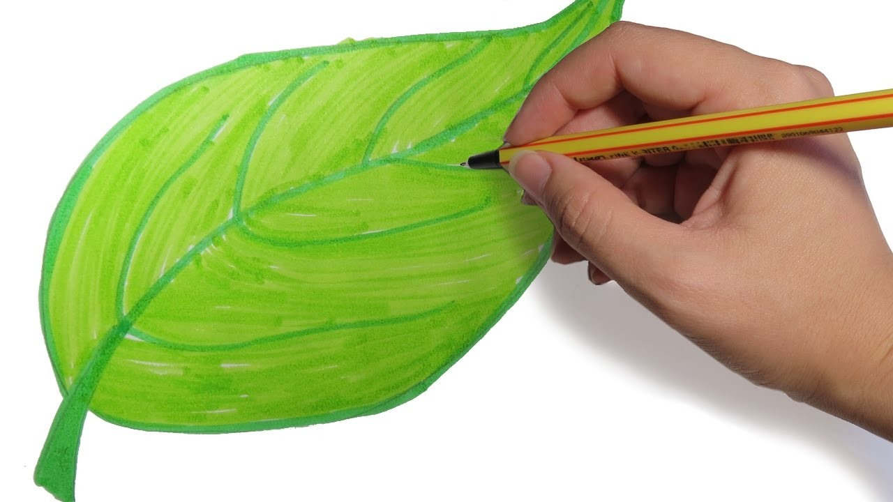 Como Dibujar Hojas De Arboles Paso A Paso Dibujos Faciles Para