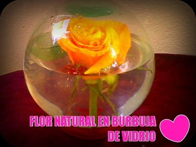 FLOR NATURAL EN BURBUJA DE VIDRIO. Natural flower in glass bubble