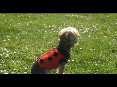 Sueter para perro crochet.ladybug sweater for dogs