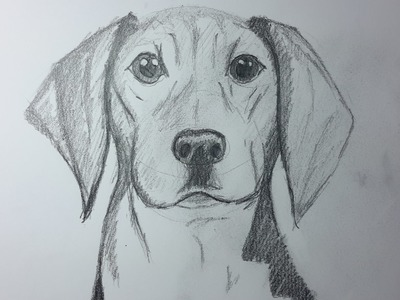 Como Dibujar un Perro paso a paso, How to draw a Dog.  [El Dibujante]