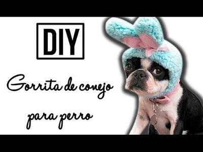DIY | Gorrita de conejo | MASCOTAS